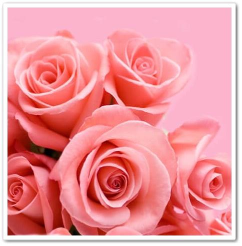 ローズサプリ モイスト 薔薇
