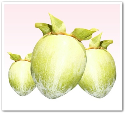 レディーズローズ 口コミ 効果 におい消す バラ ローズサプリ れでぃーずろーず 日本サプリメント 通販 最安値 成分 柿