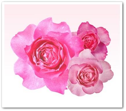 レディーズローズ 口コミ 効果 におい消す バラ ローズサプリ れでぃーずろーず 日本サプリメント 通販 最安値 成分 ダマスクローズ