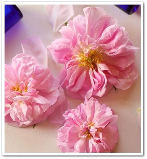 ローズドレス 口コミ 効果 リフレ バラ フレグランスサプリメント Rose Dress ろーずどれす 通販 最安値 ダマスクローズ