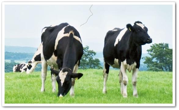かるみるく 口コミ コハルト カルシウム 骨活サプリ カルミルク 効果 ファンファレ 通販 最安値 ミルクカルシウム 牛