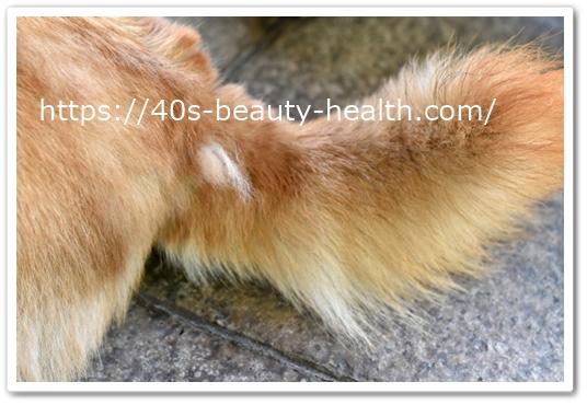 リモサボン 口コミ 使ってます ペットの抜け毛対策 洗濯用洗剤 北の達人 りもさぼん 効果 最安値 通販 柴犬 抜け毛