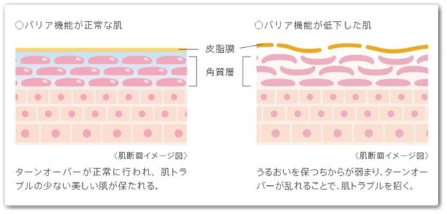 バッサ美容液 口コミ 効果 ジェル美容液 wasser ばっさびようえき 肌構造