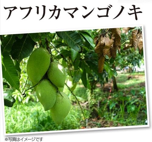 リフレ ダイエットのみかた 口コミ 効果 アフリカンマンゴノキ由来エラグ酸 成分